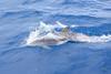 Lab Boat: I delfini ci seguono!