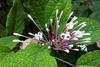 Natura di Papeete