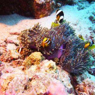 I colori della barriera corallina